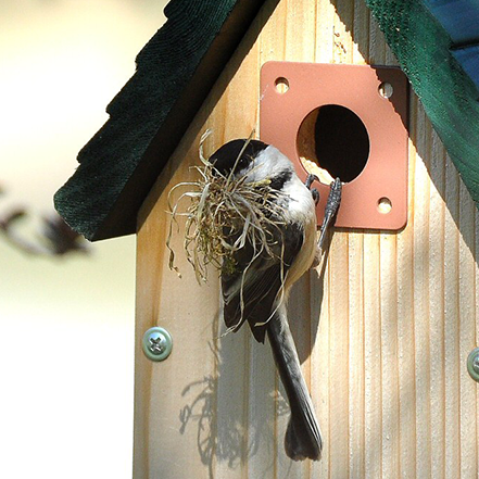 Chickadee_Nestbox